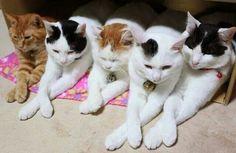 Prissy pussycats