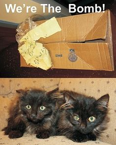 A suspicious box was discovered near the entrance of a local WalMart store.  The yellow note taped to the box said Kittens Open Slowly.  When the Sheriffs deputies arrived to investigate the ominous box they couldnt hear a sound and detected no movement.  Being the holiday season they called in the bomb squad.  After a few tense minutes of testing the box they confirmed it did not contain a bomb and opened it to find .... you guessed it ... two kittens!    Tick ... Tock