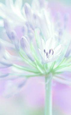 Pastel flower, purple and green Soft Colors, Pastel Colors, Soft Pastels, Wallpaper Verde, Foto Macro, Color Menta, Mint Color, Pastel Flowers, Pastel Shades