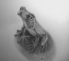 (Tree Frog) Graphite Drawing by Addison Tuley