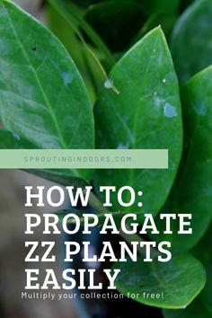 Plant Propagation, Propagating Succulents, House Plants Decor, Plant Decor, Air Plants, Indoor Plants, Zz Plant Care, Organic Gardening, Flower Gardening