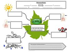 Photosynthesis and Cellular Respiration Graphic Notes by Active Brain Science Biology Lessons, Science Biology, Science Experiments Kids, Science Lessons, Teaching Science, Science For Kids, Life Science, Biology Teacher, Brain Science