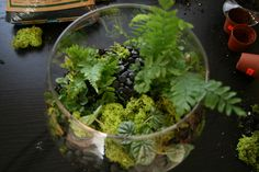 DIY terrarium! would make a great housewarming gift or project with kids