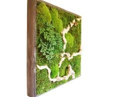 12 x 12 Plant Painting No Care Green Wall Art. Contact www.artisanmoss.com for orders. by ArtisanMoss, $94.95