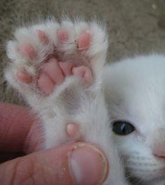 I love polydactyl cats!