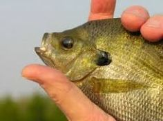 Australia is famous for its beautiful nature and obviously for fishing. Barramundi is the most popular fishing active in Australia and everyone...
