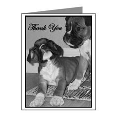 """Thank You Boxer Note Cards pack of 20    Measures 4.25"""" x 5.5""""     20 cards per pack / envelopes included  Available in your choice of paper finish: matte or glossy  #boxer #cards #dog #animal #gifts #notecards #greetings #thankyou"""