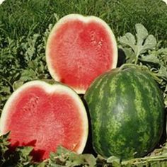 growing watermelons    **tip**  Mix 1 part milk to 9 parts water in a spray bottle and spray vines weekly to ward off powdery mildew.