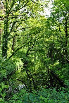 Weerspiegelingen in het water van eikenbomen in Park Clingendael.