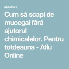 Cum să scapi de mucegai fără ajutorul chimicalelor. Pentru totdeauna - Aflu Online How To Get Rid, Permaculture, Good To Know, Diy And Crafts, Medical, Cleaning, Health, Pandora, Tattoos