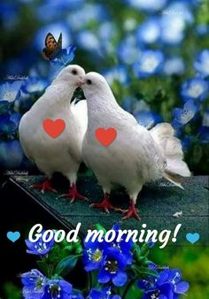 Good morning my love - Good Morning Happy Thursday, Good Morning Cards, Good Morning My Love, Morning Morning, Good Morning Wishes, Beautiful Morning Pictures, Good Night Love Images, Good Morning Photos, Morning Greetings Quotes