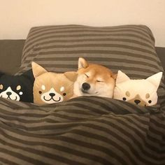 Taking Care of a Puppy by Puppy Proofing a Home Me going to sleep knowing I have 3 homework assignments I forgot about due the next day. Cute Funny Animals, Cute Baby Animals, Animals And Pets, Cute Puppies, Cute Dogs, Dogs And Puppies, Shiba Inu, Dog Pictures, Cute Pictures