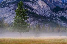 Foggy Night, Banff by flyingfishtw on 500px