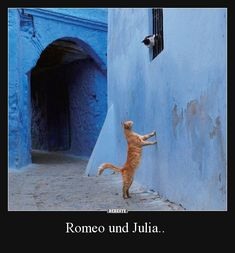 Romeo and Juliet kitties! Funny Cat Memes, Funny Cats, Meme Meme, Diy Funny, Crazy Cat Lady, Crazy Cats, I Love Cats, Cool Cats, Animals And Pets