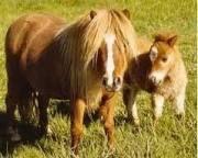 mini ponies - Google Search