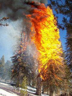 A Year Round Fire Season? - http://scienceblog.com/77571/a-year-round-fire-season/