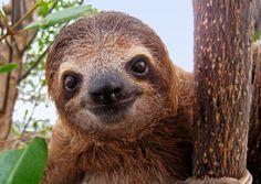 http://www.worldanimalfoundation.org/i/Sloths.jpg