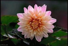 animated flowers blooming | ... on Slow Motion Flower Bloom Reverse Gif Best Funny Gifs And Animated