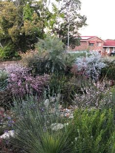 Australian native plants flowering in winter - mixed cottage border
