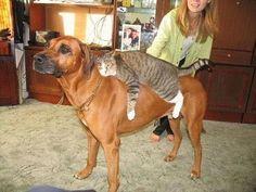 Too much catnip....take me home Jeeves...