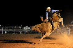 Photo at the Mudgee Rodeo Photo by Amber Hooper First Photo, Rodeo, Family Travel, Camel, Travel Tips, History, Animals, Kids, Inspiration