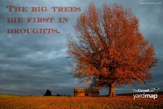 Research shows that in a drought the bigger trees are the first to die off. What to do? A rain barrel is a good option. Set one up for each big tree in your yard, and focus water use on those large, valuable trees. Read about rain barrels: http://content.yardmap.org/learn/adding-a-rain-barrel-to-your-property/  research: http://www.sciencedaily.com/releases/2015/09/150929142248.htm