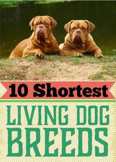 The 10 Shortest Living Dog Breeds