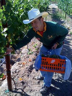"""Picking #wine grapes with a Home Depot basket"""