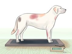 Get Dogs to Gain a Healthy Weight Step 1 Version 2.jpg