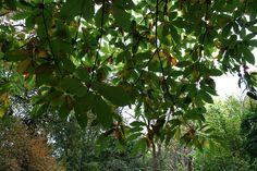 Look Up into the Canopy   #WinkworthArboretum 23 October 2015  https://www.pinterest.com/annbri/