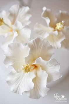 White hibiscus - if I can find little pearls this is going to be the perfect present for my grandma!!