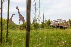 http://www.delices-mag.com/evasion/bons-plans/planete-sauvage-un-safari-photo-aux-portes-de-nantes/