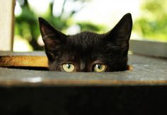 Black Cat ((Died laughing!))