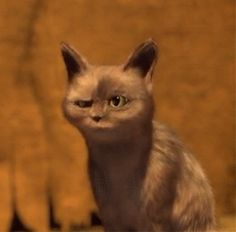 Discover & share this Cats Shocked GIF with everyone you know. GIPHY is how you search, share, discover, and create GIFs. Animiertes Gif, Animated Gif, Cartoon Gifs, Cute Cartoon Wallpapers, Funny Animals With Captions, Gato Gif, Funny Parrots, Amazing Gifs, Cute Love Gif