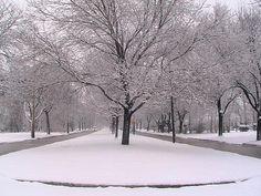 Snowy Fairmount Blvd, Shaker Heights, OHIO