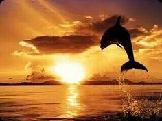 Δελφίνι στο ηλιοβασίλεμα