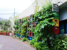 ■ Milk crate Vegetable Vertical garden