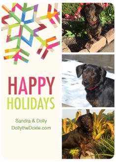 Happy Holidays from Dolly the Doxie!