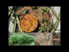 Medicinal Rice P5L Formulations for Achillea Excess: Pankaj Oudhia's Med...