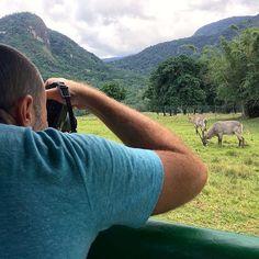 Hoje foi dia de Safari aqui no @PortobelloResort que possuem várias espécies vivendo em um enorme espaço ao ar livre. A experiência é com animais típicos da savana. Com zebras búfalos emas avestruzes camelos dromedários cervos etc. As crianças amam! E eu também! Hehehe.