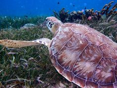"""Why You Should Visit Belize   The Travel Channel   """"We've got 10 good reasons why you should visit Belize City -- and Hol Chan Marine Reserve, Shark Ray Alley and Xunantunich are just a few attractions to get you started."""""""