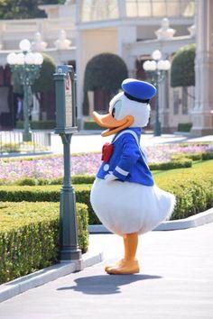 Disney Fan, Disney Duck, Cute Disney, Disney Mickey, Disney Parks, Donald Duck Characters, Walt Disney Characters, Disney Films, Disney Cartoons