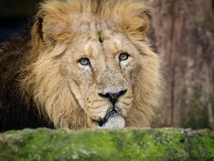 Zoo photography: a fool-proof method for capturing animals through glass
