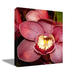Hey, I found this really awesome Etsy listing at https://www.etsy.com/listing/240990919/cymbidium-vertical-canvas-print