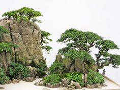 A close-up of a part of a penjing style planting from the World Bonsai Friendship Federation Convention that took place in China last month