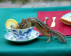 21 Tea Parties Too Cute To Be Real!