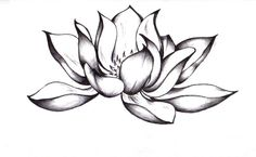 Flower Lotus Tattoo - ClipArt Best