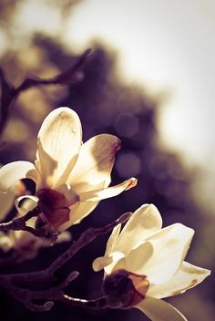 blooms reaching up to the sun-