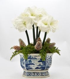 Fabulous 5 stem white amaryllis, pinecone with holiday greens arrangement