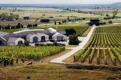 Disznókő vineyard at Tokaj. Photo by Tim Clinch. Hungarian Food, Wine Vineyards, Black Grapes, Heart Of Europe, Dry White Wine, Budapest Hungary, Wine Making, Wineries, Wine Country